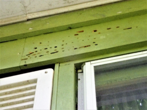 Wood Destroying Insect Inspections Termite Inspection Nj