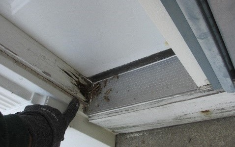 Central NJ Termite Inspection