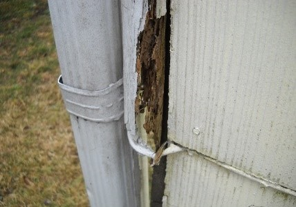 Termite Inspection Jersey Strong Home Inspections