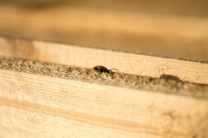 termite inspections monmouth county nj